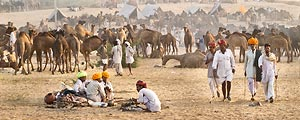 With thousands of people, camels, horses and cows, the Pushkar Camel Festival is an amazing experience.