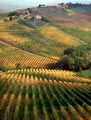 This vineyard outside of San Gimignano was changing color as winter was approaching.