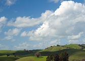 North Marin Hills