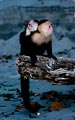 At Manuel Antonio National Park in Costa Rica, the spider monkeys control the beach.